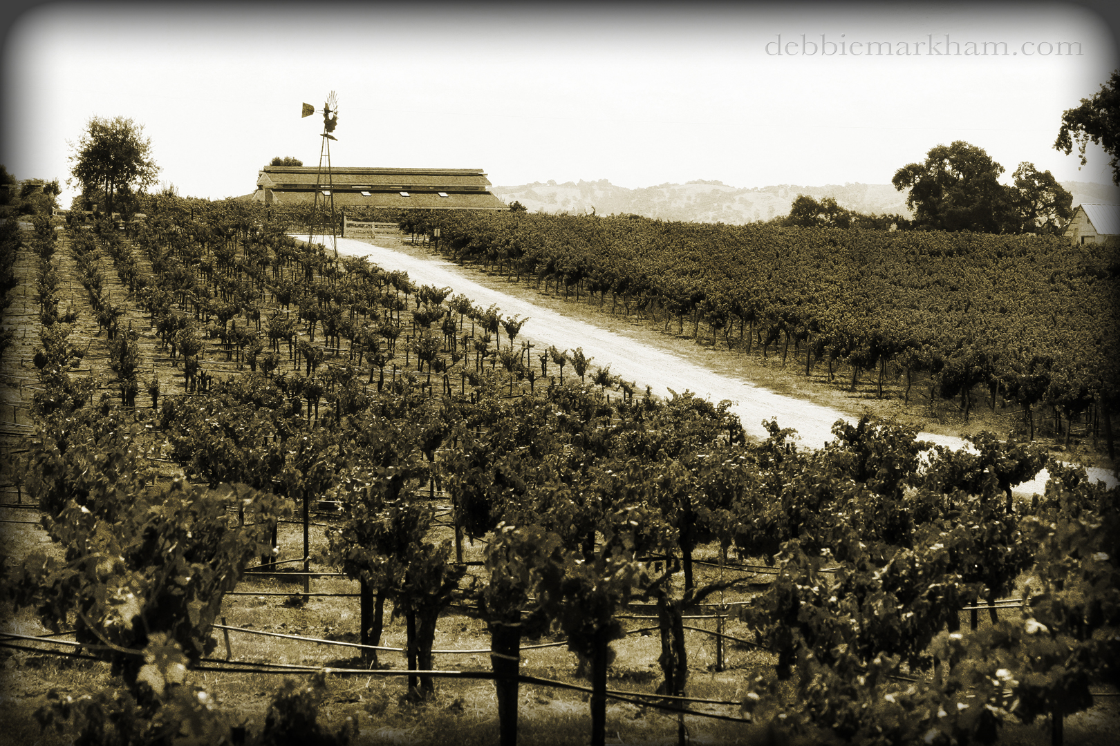 Cambria Photographer Debbie Markham-Landscape of Castoro Winery - Vineyards Outdoor