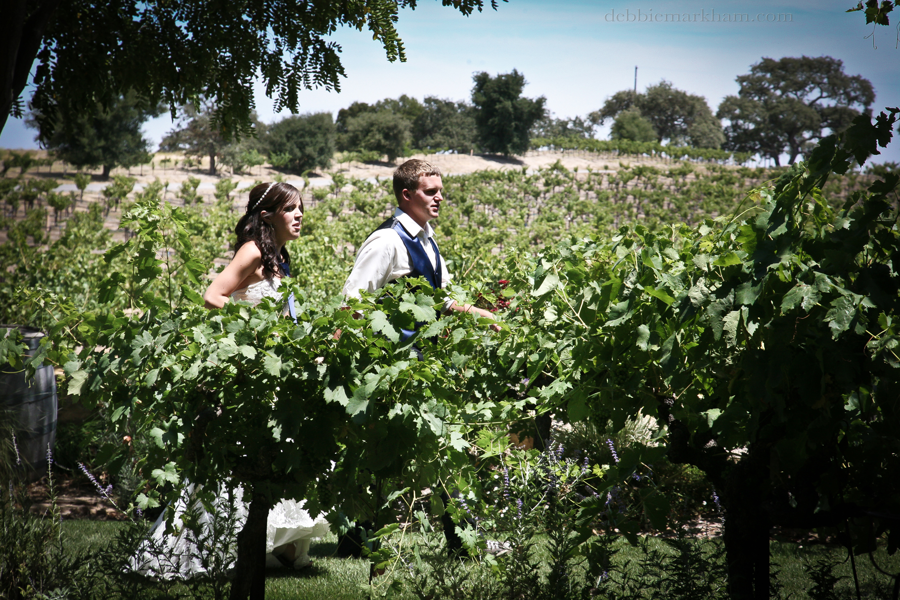 Cambria Photographer Debbie Markham-Paso Robles Wine Country Wedding at Castoro Winery-140