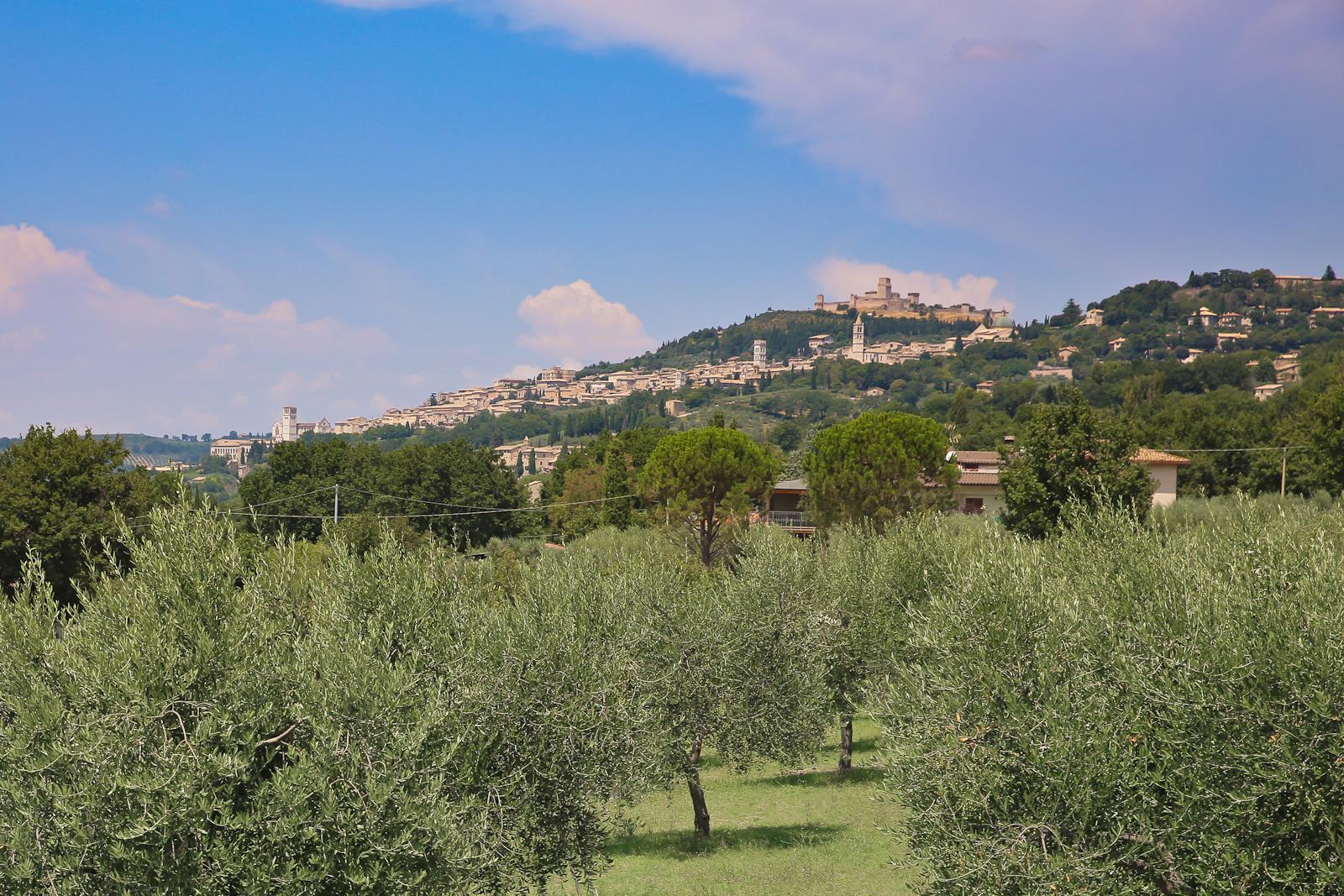 Assisi fb-2135